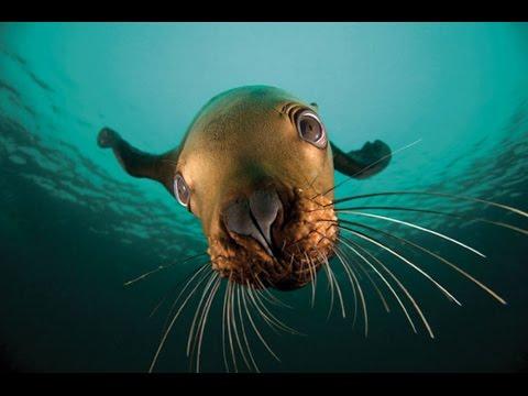 Sand Rock - Seattle Scuba Diving