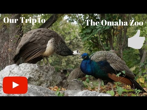 Our Trip To The Omaha Zoo