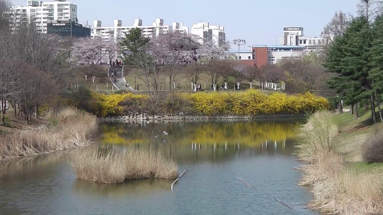 봄꽃 만개한 올림픽공원 - YouTube
