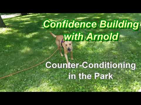 Confidence Building w Arnold - Counter-Conditioning in the Park