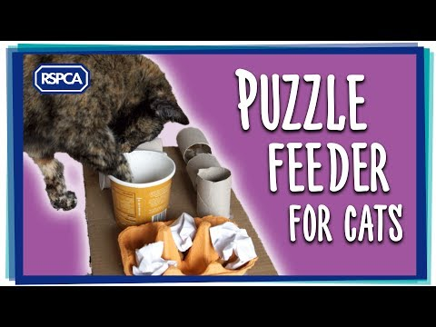 Make a Cat Puzzle Feeder