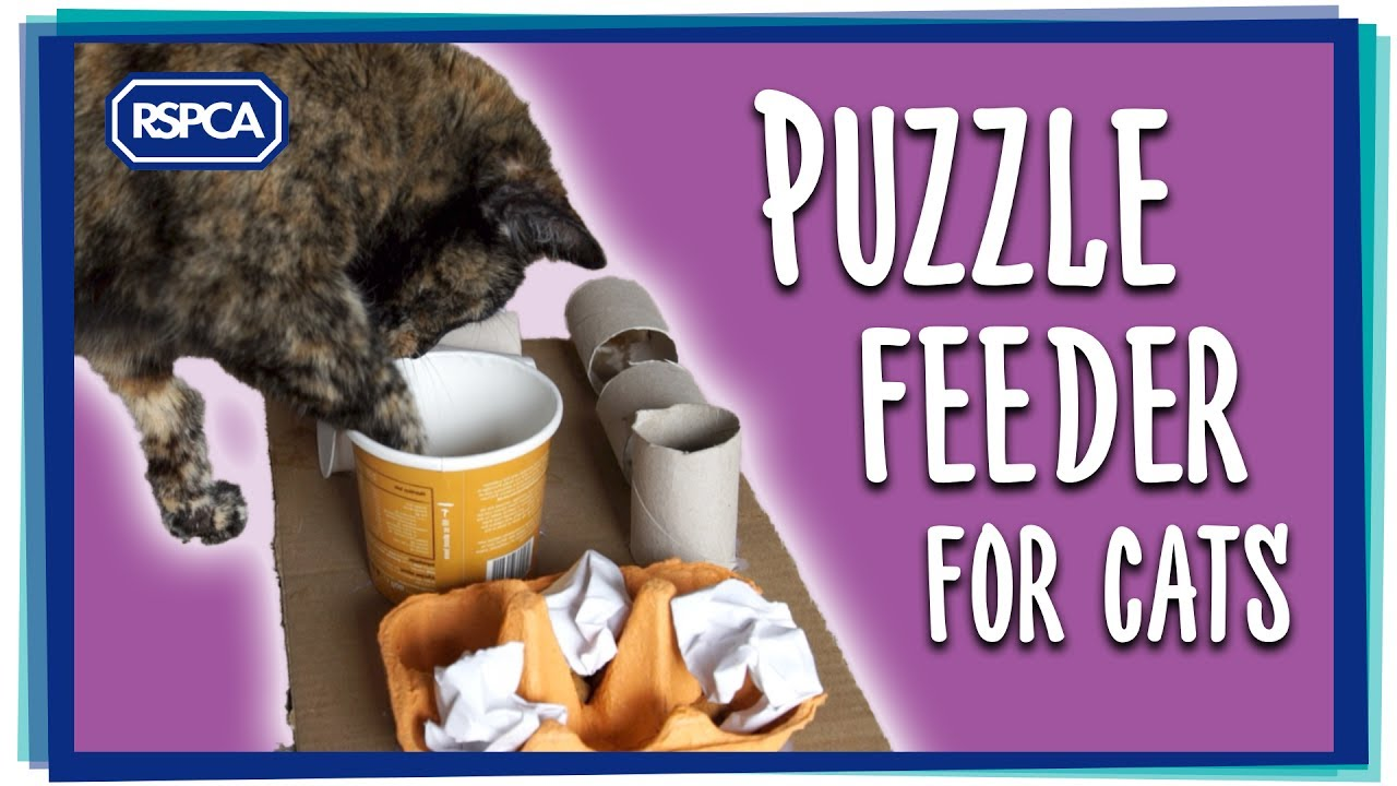 puzzle cat feeder tower id wooden