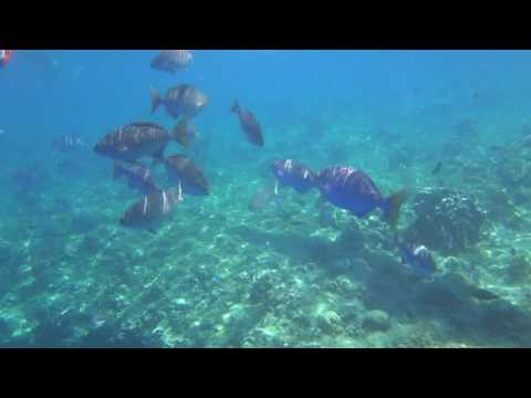 Balicasag Marine Sanctuary - Panglao, Bohol