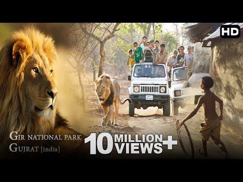 आखिर क्यूँ आते हे शेर इनसानीं इलांको मे ? [GIR Forest National Park India]