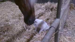 chat câlin avec un cheval