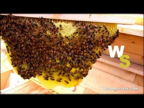 Beekeeping For Beginners Honeycomb