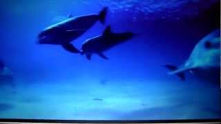 Dolphin Companion A LEDNEV/ E NESTEROV.MP4