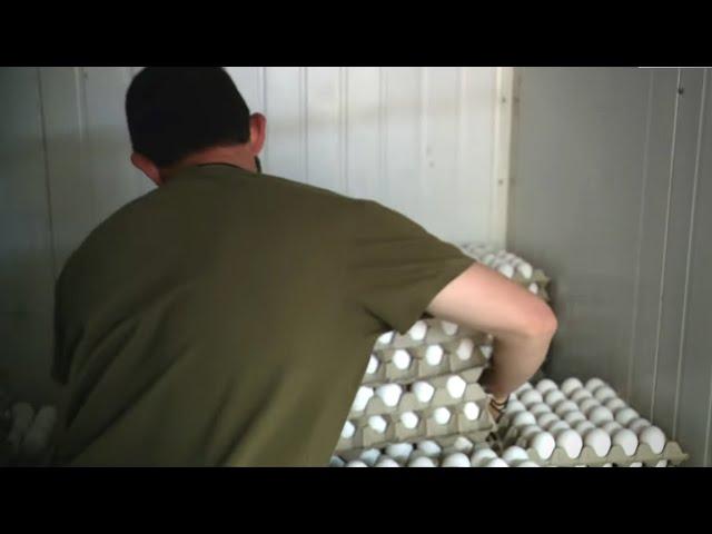 בלאגן בביצים