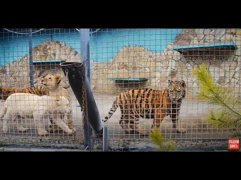 Вопрос: Кого боятся леопарды?