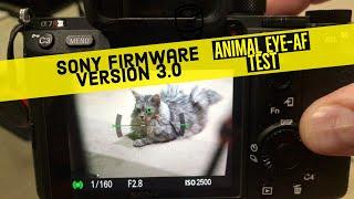 Sony Animal Eye-AF tested on Sean Coonery