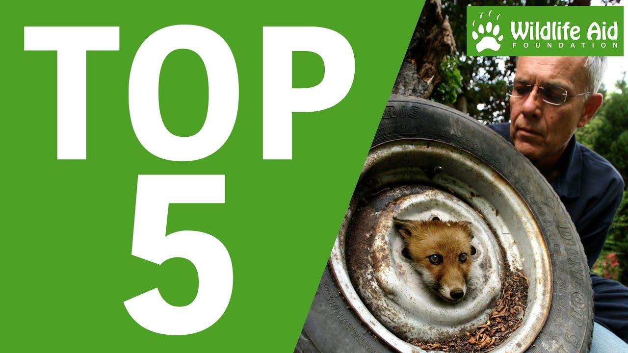 Top 5 Most Memorable Wildlife Rescues!