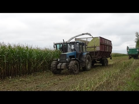 "Уборка кукурузы на силос в СПК ""Гигант"""