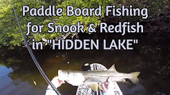 Paddle Board Fishing for Snook and Redfish [Secret Lake near Tampa, FL]