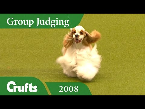 American Cocker Spaniel wins the Gundog Group Judging at Crufts 2008 | Crufts Classics