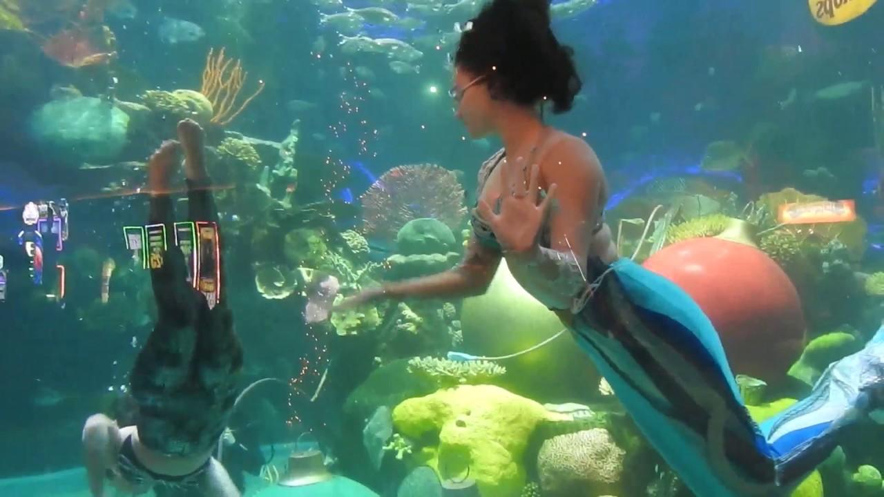 Silverton casino aquarium casino portal top