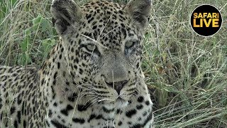 safariLIVE - Sunset Safari - March 22, 2019