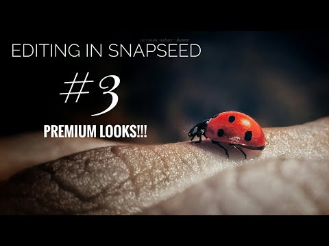 How To Professionally Edit Macro Photo In Snapseed | Premium  | Mobile Editing | Instagram