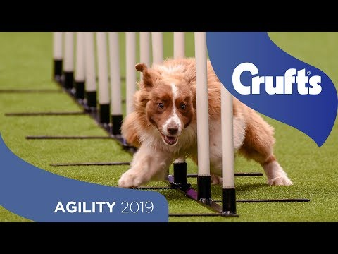 Agility - Crufts Team Large Final Part 1 | Crufts 2019