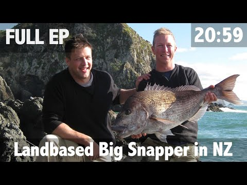 Land Based Big Snapper In NZ