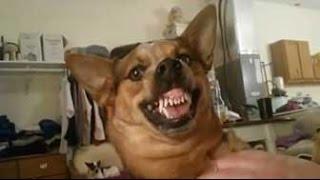 Всем смотреть, видео приколы с животными. Смешная подборка с домашними животными.