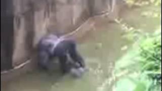 米オハイオ(Ohio)州シンシナティ動物園(Cincinnati Zoo)で檻の中に...