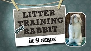 Litter Training Your Rabbit