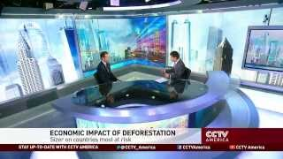 Economic Impact of Deforestation