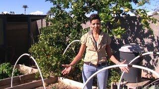 Organic Pest Control Tips