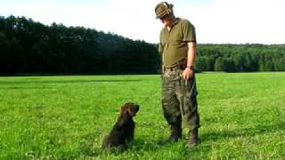 Dog Training - Bark On Command. / Szkolenie Psa - Daj Głos.
