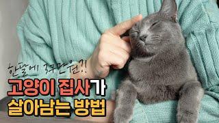 고양이 집사가 살아남는 방법(feat.스타일씨)