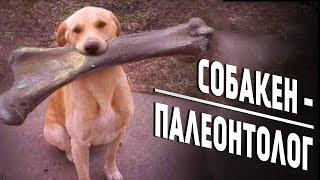 """Собака - ПАЛЕОНТОЛОГ или """"Как ПЁС нашел зуб МАМОНТА"""""""