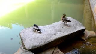 アキーラさんお薦め!イギリス・バースの風呂1,Bath(city),England,UK