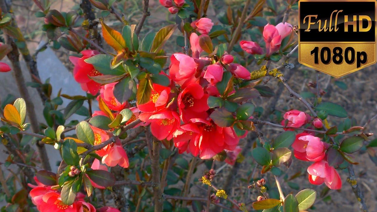 Beautiful Flowering Nature Video Full Hd Flowering Trees Amazing