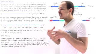 Exons and Introns of Eukaryotic mRNA