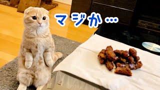 ウンチの後にかりんとうを見た猫の反応