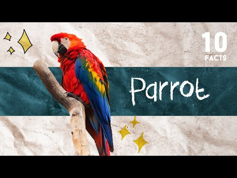 10 Facts About Parrot
