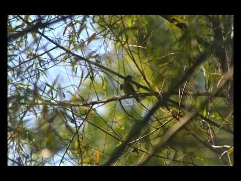 Bond Park Birds