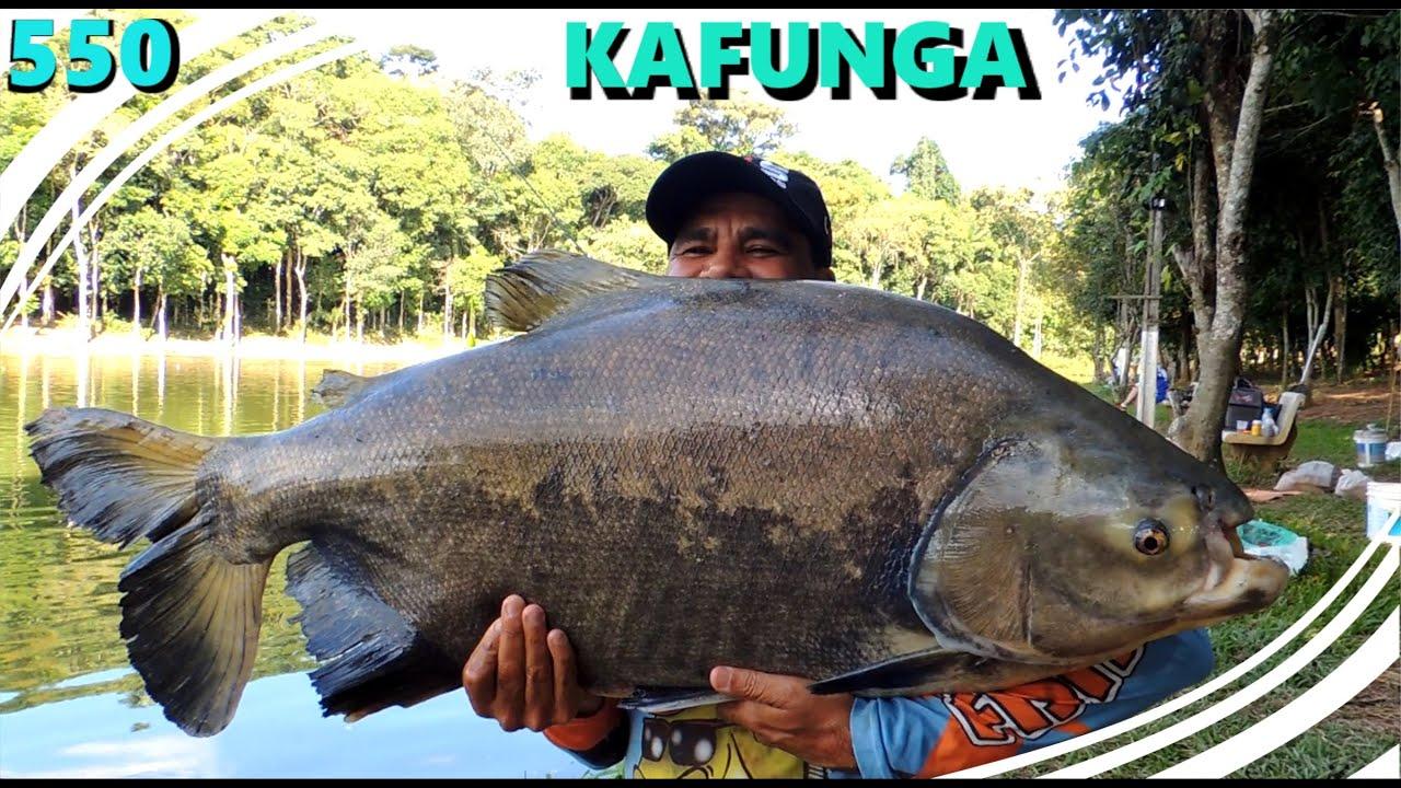 Kafunga - Muitos Tambas em nossa primeira visita - Fishingtur na TV 550
