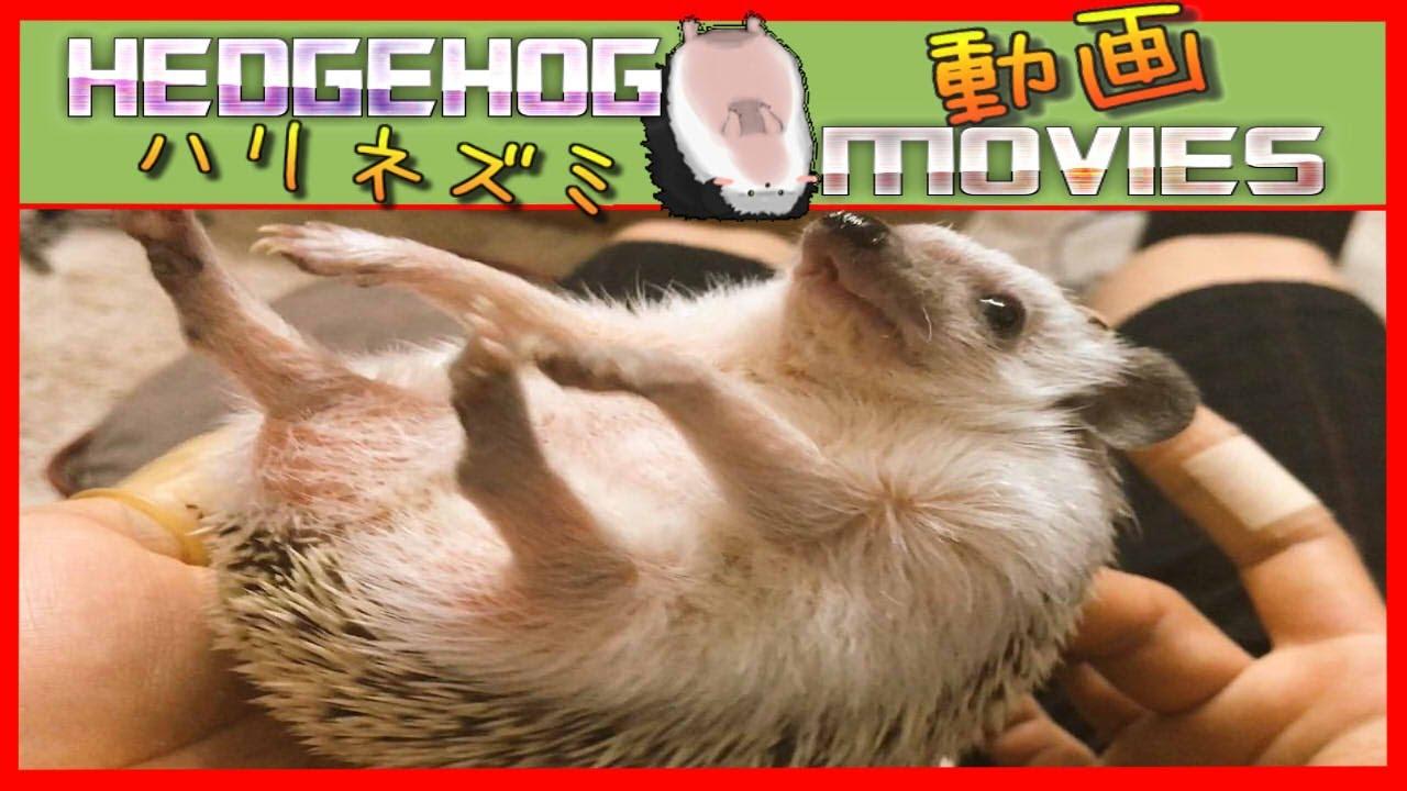 イムちゃんギザかわゆすな:Hedgehog