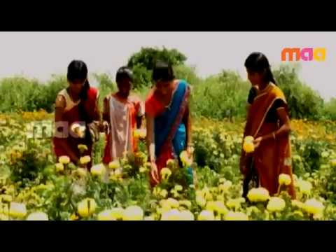 bathukamma song 2014