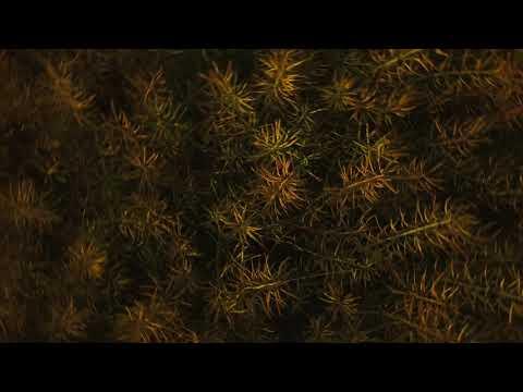 Envee - Gry iZabawy feat. Muzykoterapia [UKM 070]