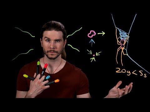Weird Spider Webs | Because Science Live!
