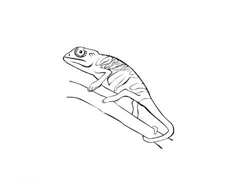 How To Draw A Chameleon / Как нарисовать хамелеона