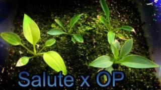 Hosta Seedlings.mpg