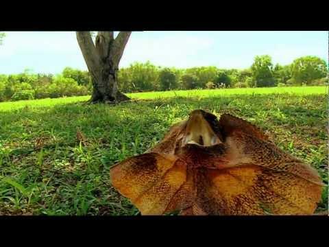Outback Wildlife Rescue Episode 9