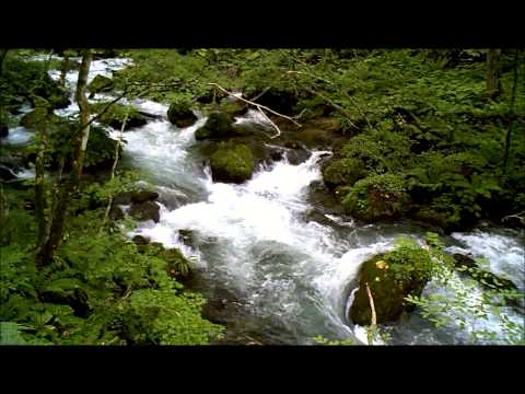 Oirase Stream in Aomori Prefecture, Japan/ 奥入瀬渓流