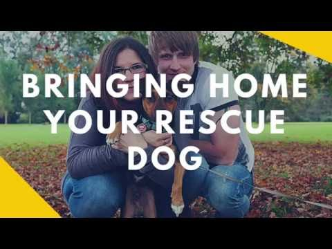 Bringing Home Your Rescue Dog