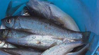 Первая рыбалка 2019 на открытой воде./ на мутной холодной воде/