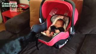 Кошки видео  Кошка и младенец