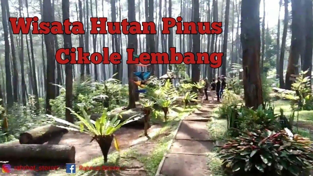 Wisata Hutan Pinus Cikole Lembang Youtube
